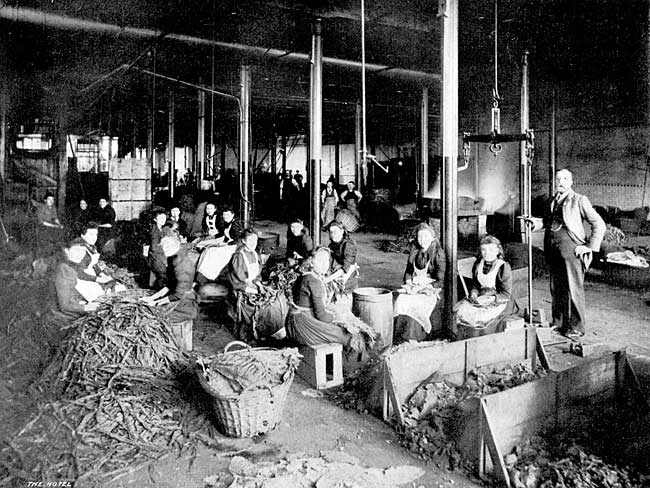 Tobacco Sorting and Spreading Room at the Castle Tobacco Factory.